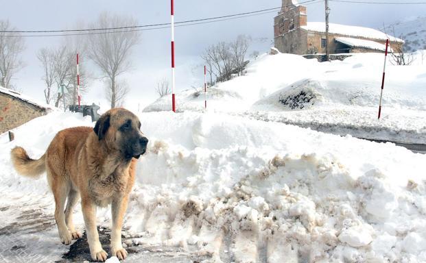 El Gobierno activa la preemergencia por nevadas en León   Leonoticias